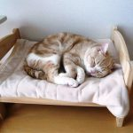 IKEA Pet Furniture Bed With Pad
