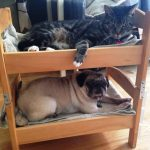 IKEA Pet Furniture Design Ideas