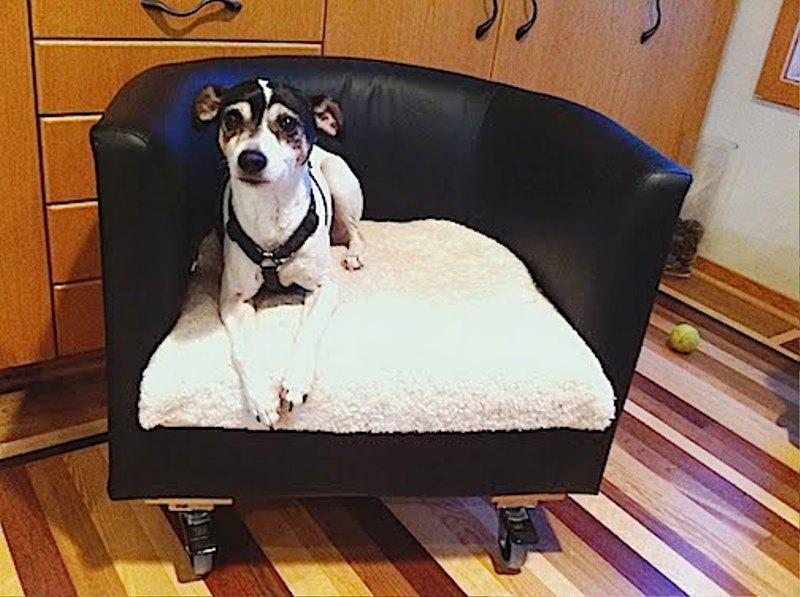 IKEA Pet Furniture For Dogs