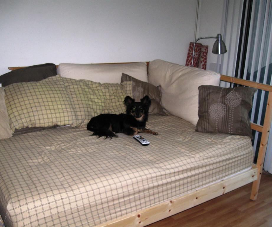Image of: IKEA Bed Couch